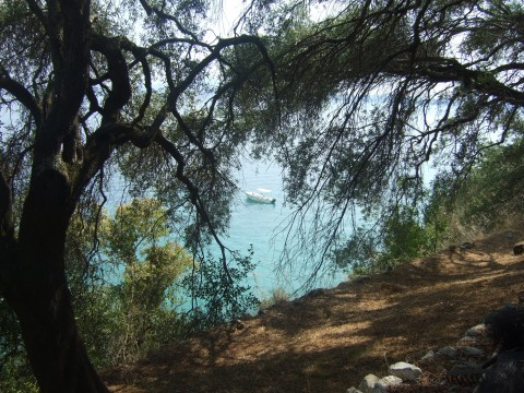 View through olive trees to the sea with boat parked up in the distance