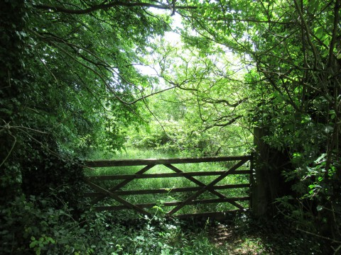 Looking past the gate into lush green lane