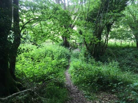 Looking towards a stile surrounded by bright green leaves from trees and bushes
