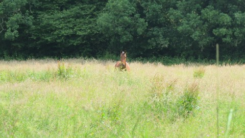 Horse distant in field, surrounded by grass