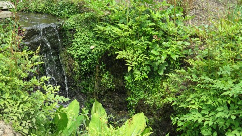 Waterfall surrounded by greenery